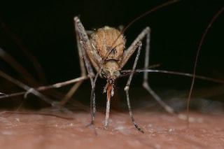 Il virus del Nilo trovato in Italia: trasmette la Febbre West Nile. Cos'è, quali sono sintomi e cura