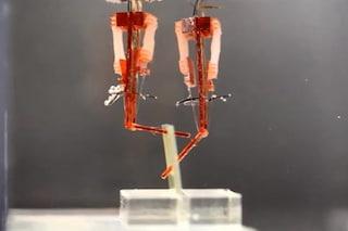 Robot con muscoli veri: i cyborg della fantascienza diventano realtà