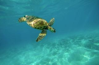 """Oceani più sani con la pesca sostenibile: """"Così salvaguardiamo l'ambiente e la nostra tavola"""""""