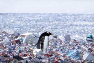 Il dramma dei pinguini su un'isola di plastica: la scomoda verità del video del WWF