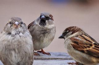 Anche gli animali parlano tra loro: dai loro botta e risposta al nostro linguaggio