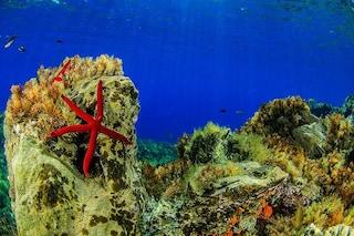 Sorpresa alle Eolie, una nuova stella marina spunta tra l'incantevole biodiversità siciliana