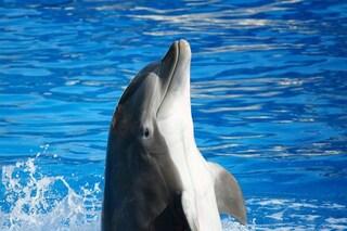 I delfini si 'tengono per mano' e danno un nome ad amici e nemici