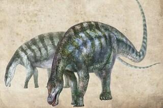 """Il dinosauro """"stupefacente"""" cambia la nostra storia: per gli scienziati non doveva esistere"""