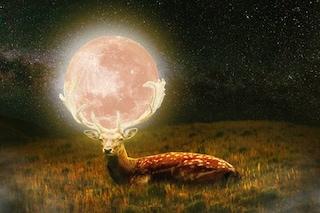 Luna piena del Cervo 'insanguinata' dall'eclissi totale del secolo: come e quando vederla