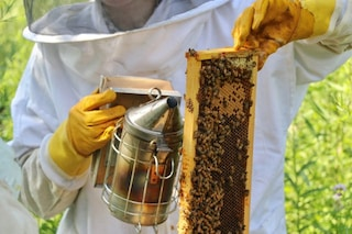 La pappa reale per curare il cancro: nel 'latte' delle api forse un segreto curativo
