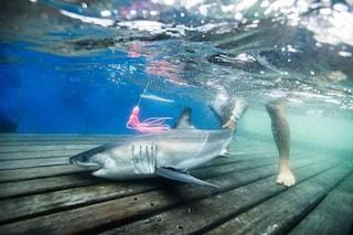 C'è un 'asilo nido' di squali bianchi nell'oceano: i baby predatori amano migrare