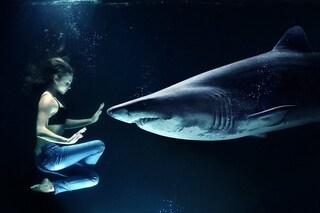 Cosa c'è da sapere davvero sulla paura di essere attaccati da uno squalo