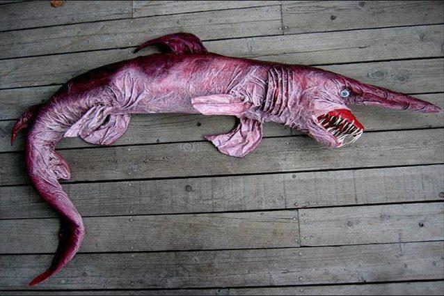 Squalo folletto o squalo goblin
