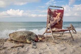 Rarissima tartaruga marina strangolata da una sedia a sdraio: le immagini drammatiche
