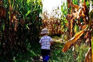 Autismo, il DDT aumenta il rischio: primo studio dimostra il legame con l'insetticida