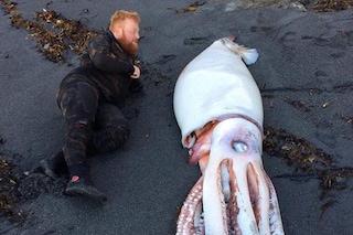 Calamaro gigante si spiaggia in Nuova Zelanda: le immagini della mitica creatura marina