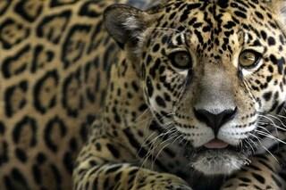 La Colombia dalla parte di animali e natura con la più grande area protetta tropicale