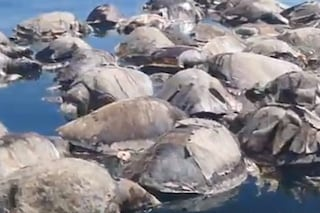Strage di tartarughe marine in pericolo di estinzione, morte in 300 ed è solo colpa nostra