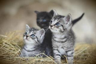 Gatti vietati in un paese della Nuova Zelanda per proteggere la fauna a rischio estinzione