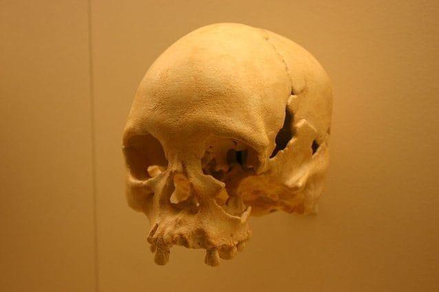 Calco del cranio di Luzia. Credit: Ryan Somma