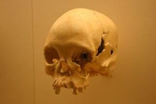 Luzia, il più antico fossile umano del Sud America forse perduto nel rogo del museo di Rio