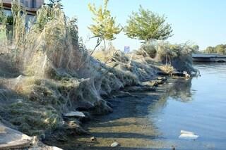 Città coperta dalle ragnatele, la scioccante invasione dei ragni: cosa sta succedendo