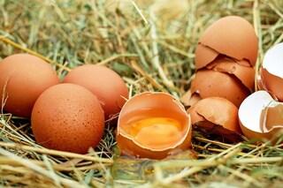 Uova sì o no? Cosa pensiamo di sapere, sbagliando