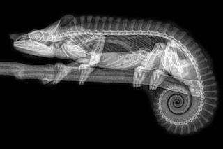 Animali ai raggi X, il loro 'lato oscuro' svelato da queste affascinanti immagini