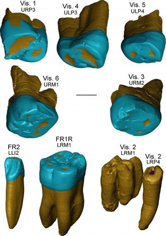 Ricostruzione 3D dei denti recuperati: credit Zanolli et al.