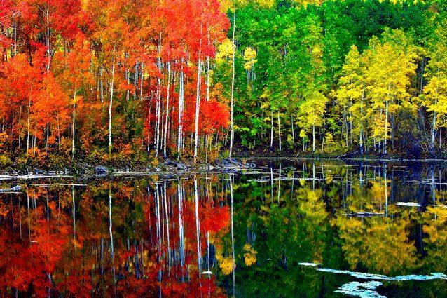 Credit: Intermountain Forest Service, USDA