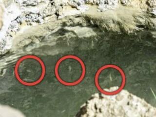 Pesci vivi nel Mar Morto come in una profezia di Ezechiele nella Bibbia: l'ennesima fake news