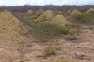 Hanno 4.000 anni i mucchi di terra formati dalle termiti che si vedono dallo spazio