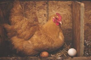 Meglio l'uovo oggi o la gallina domani? La tua risposta svela chi sei