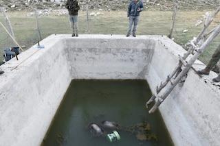 Mamma orsa e 2 cuccioli trovati morti annegati in una vasca: tragedia nel Parco d'Abruzzo