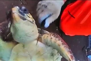 Tartarughe marine salvate in Puglia da una morte orribile: le immagini del primo soccorso