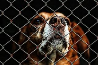 A Natale i cani non si comprano: perché dobbiamo adottare consapevolmente