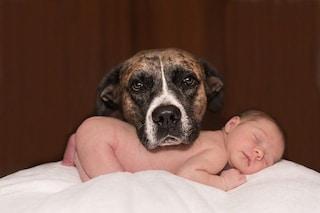 Siamo geneticamente fatti per vivere con un cane: lo svela il nostro DNA