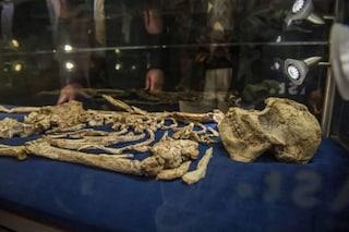 Il fossile Little Foot appartiene a una nuova specie di ominide: l'ipotesi degli studiosi