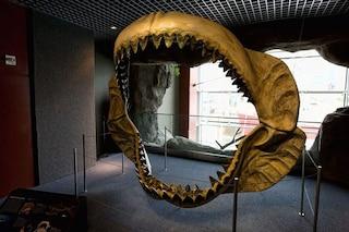 "Il gigantesco squalo ""megalodonte"" si sarebbe estinto a causa di un evento astronomico"