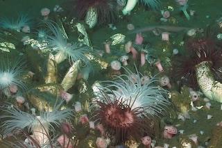 Scoperto meraviglioso mondo perduto in fondo all'oceano: è pieno di specie mai viste