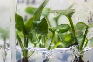 Piante OGM con geni di coniglio assorbono gli inquinanti cancerogeni che abbiamo a casa