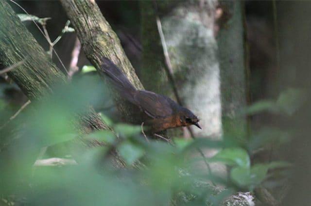 Credit: American Bird Conservancy