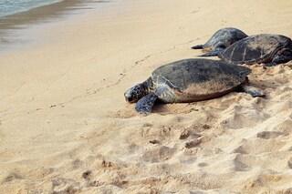 Il 100% delle tartarughe marine contaminato da microplastiche: studio choc