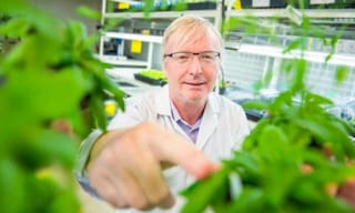Le piante non sopportano di essere toccate: basta sfiorarle per modificare il loro genoma