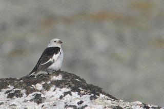 Il 10% degli uccelli di montagna europei è scomparso in soli 12 anni: strage a causa nostra