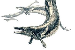 Questa gigantesca balena preistorica era una spietata predatrice di altri cetacei