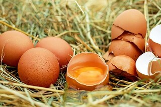 Farmaci nelle uova di galline per curare il cancro: OGM per produrre proteine umane