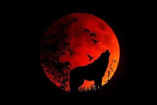 Come e dove vedere l'eclissi della Superluna piena del Lupo di 'sangue'