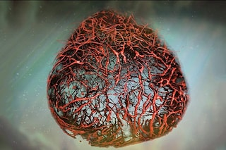 Primi vasi sanguigni umani 'perfetti' creati in laboratorio: traguardo storico