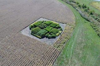Super piante OGM producono il 40% di raccolto in più: come le hanno create gli scienziati