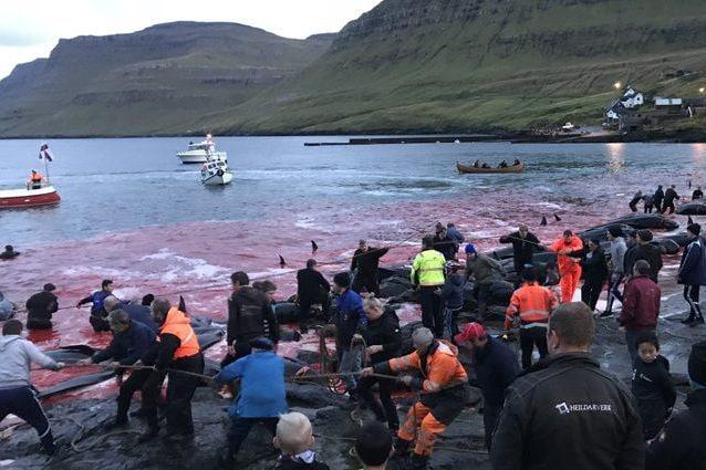 Una Grindadrap nel 2018 Credit: Sea Shepherd