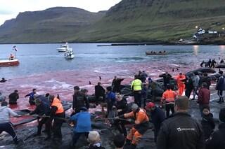 Settanta balene pilota massacrate con coltelli e uncini nel giorno di Capodanno alle Faroe
