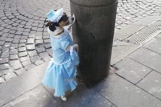 Che problemi ha chi veste un cane?