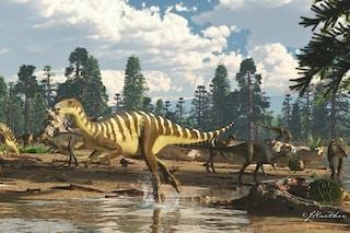"""Nuova specie di """"dinosauro-canguro"""" scoperta in Australia: chi era il Galleonosaurus dorisae"""